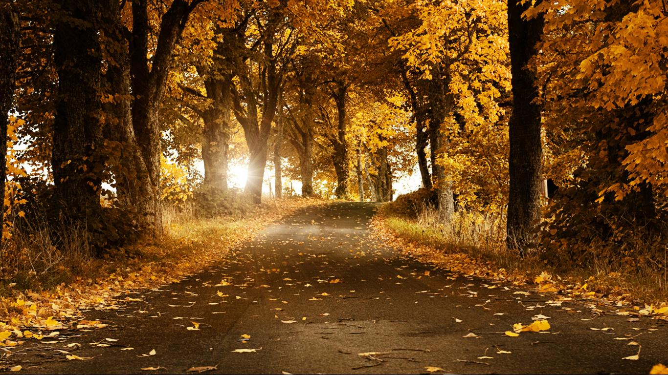 Autumn Backgrounds Pictures Group (34+)