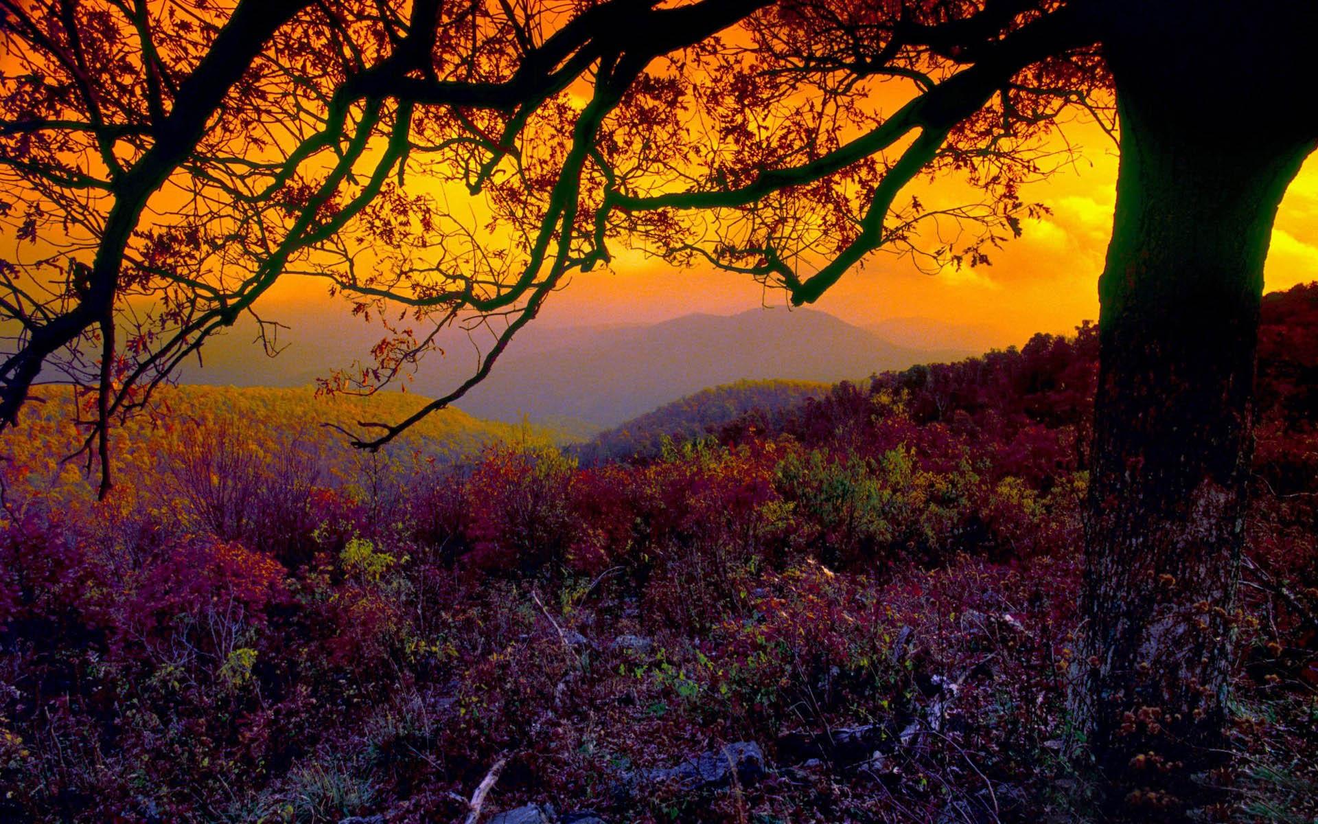 Autumn Images Backgrounds - WallpaperPulse