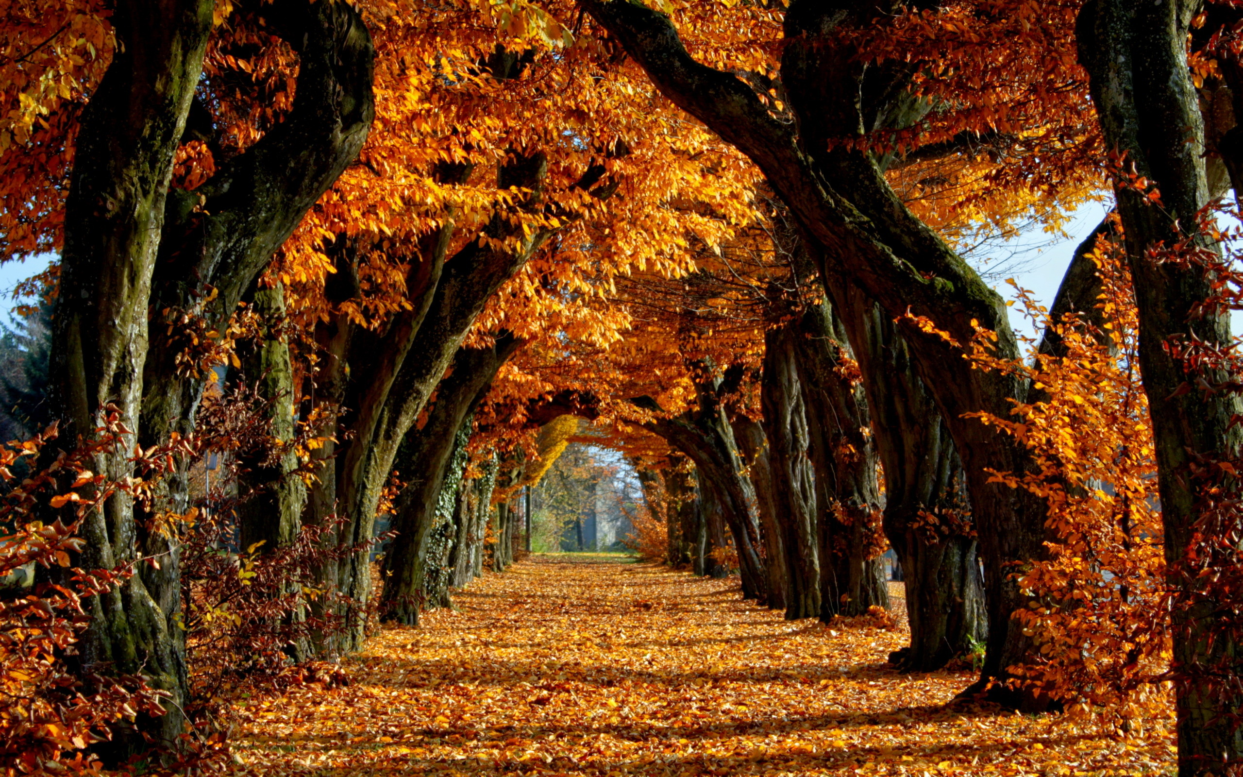 Fall Desktop Wallpaper Backgrounds - WallpaperSafari