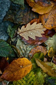 Collection of Fall Cell Phone Wallpapers on HDWallpapers