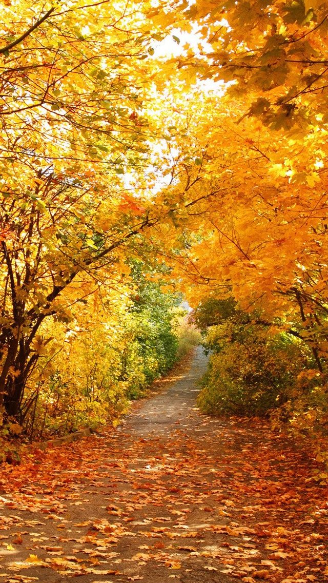 Autumn Phone Wallpapers - WallpaperPulse