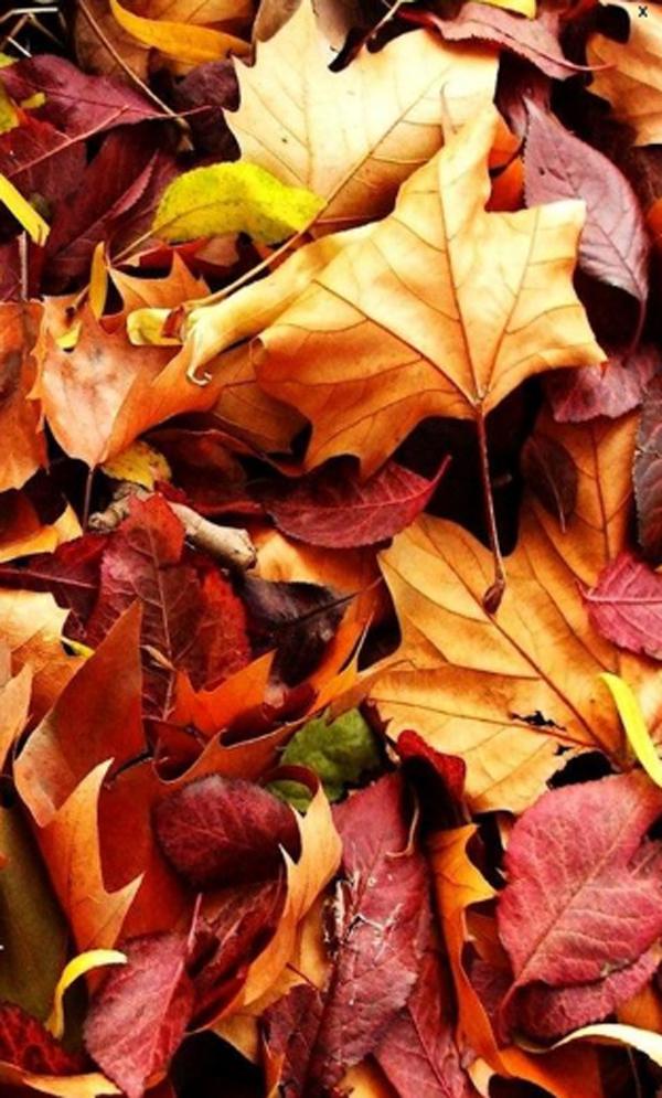 Autumn Phone Wallpaper - WallpaperSafari