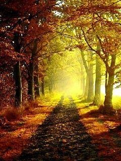 Download free Nature/Landscape wallpaper Autumn Road for mobile phones