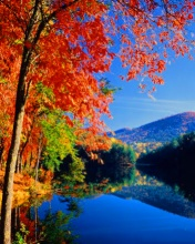 Autumn River Mobile Phone Wallpapers 176x208 Mobile Phone Graphics