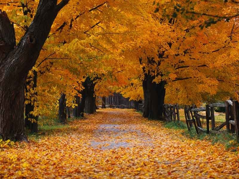 Autumn Wallpaper Download