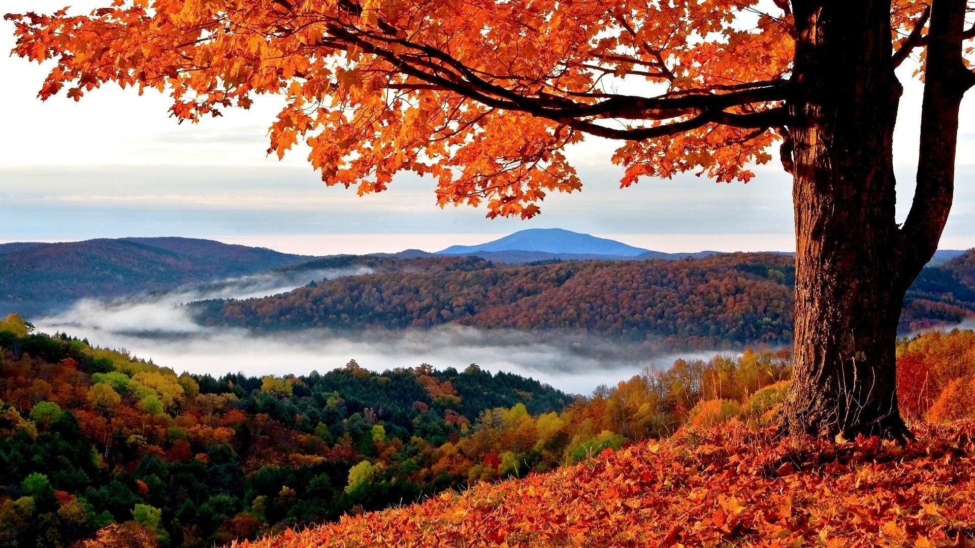 Hd Autumn Wallpaper