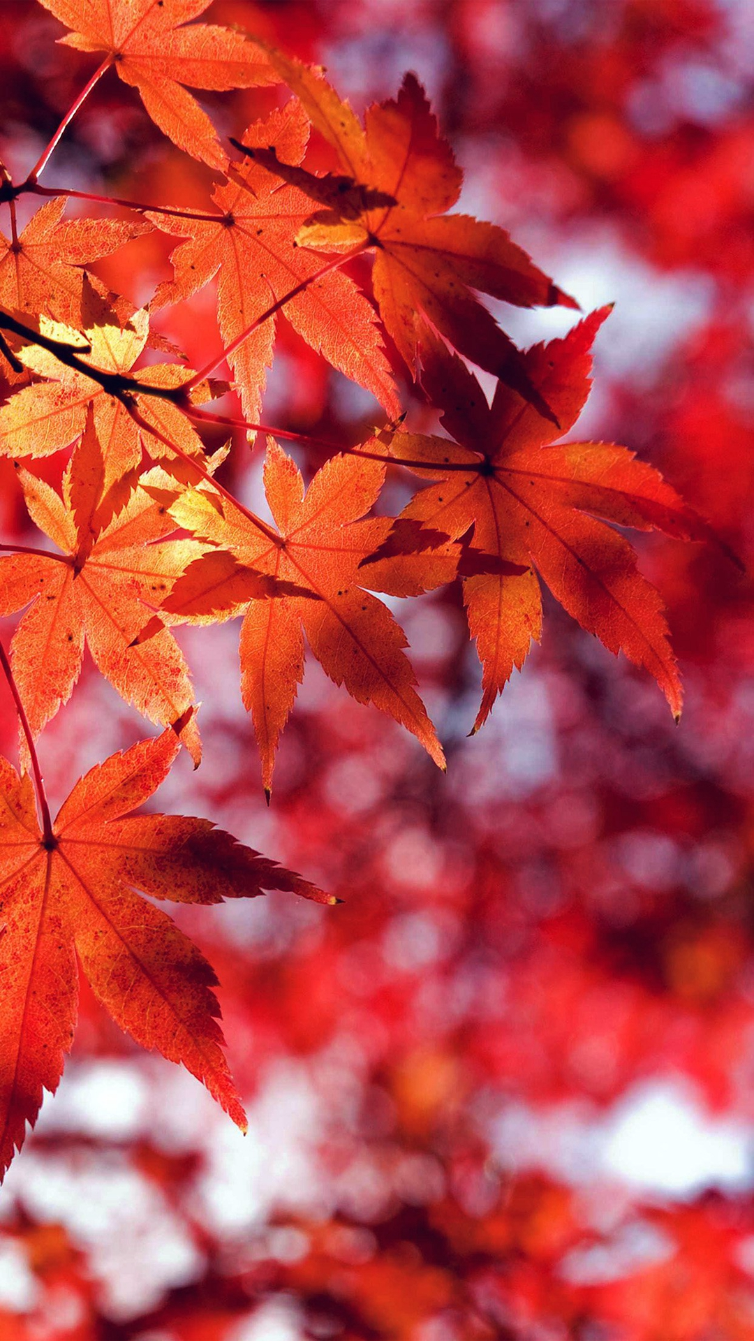 autumn iPhone 6 Wallpapers | iPhone Wallpapers, iPad wallpapers