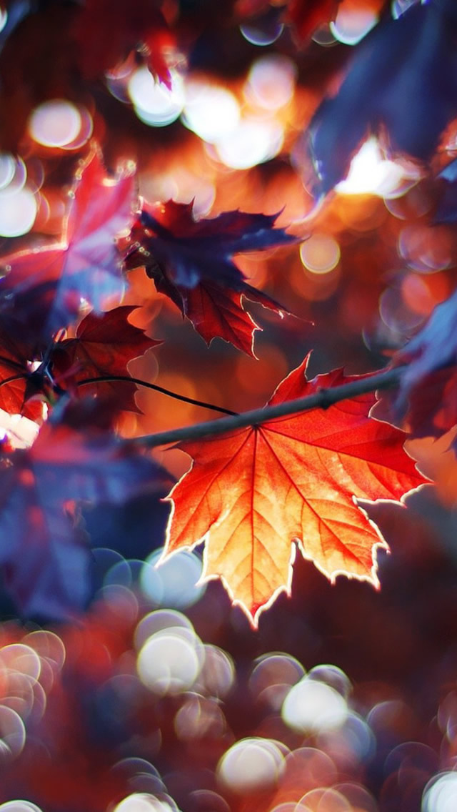 iPhone 6 Autumn Wallpaper - WallpaperSafari