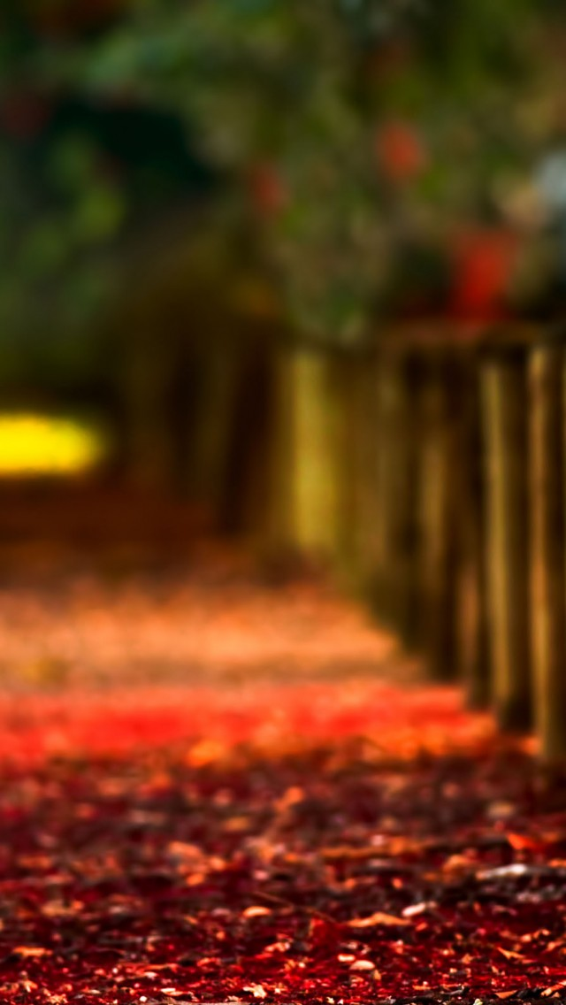 Collection Of Autumn Wallpaper Iphone On HDWallpapers