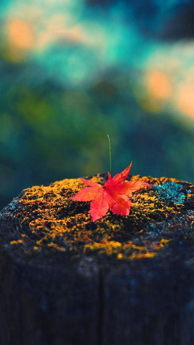 The best fall or autumn themed wallpapers for iPhone 5s