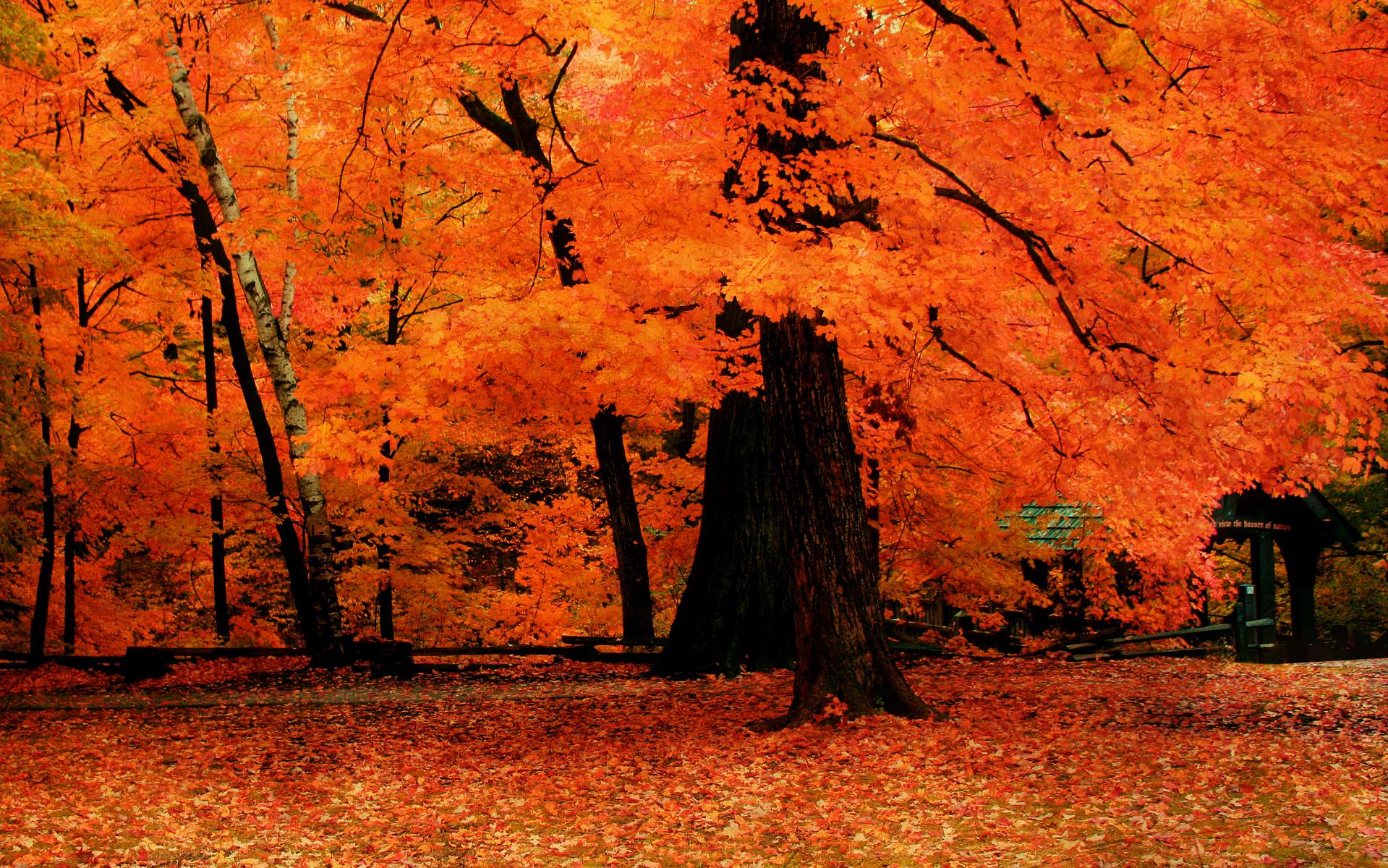 autumn wallpaper widescreen - sf wallpaper