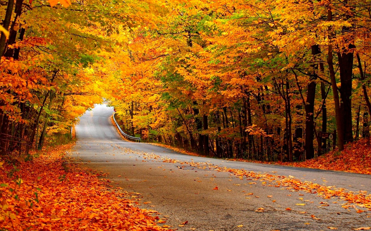 Autumn Street Wallpaper Photography #9232 Wallpaper | High