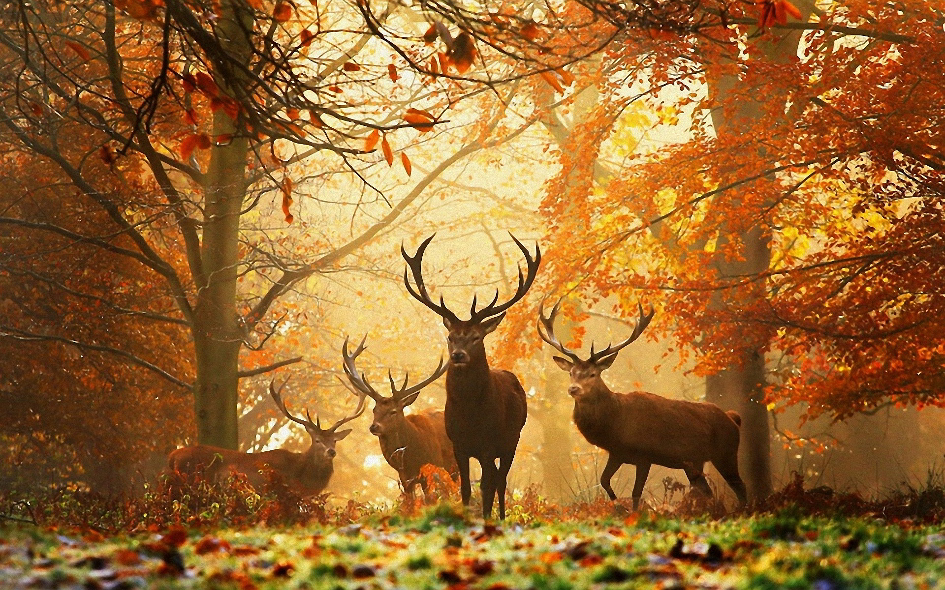 Creative Autumn Wallpapers - #WPWLN57 SHunVMall com