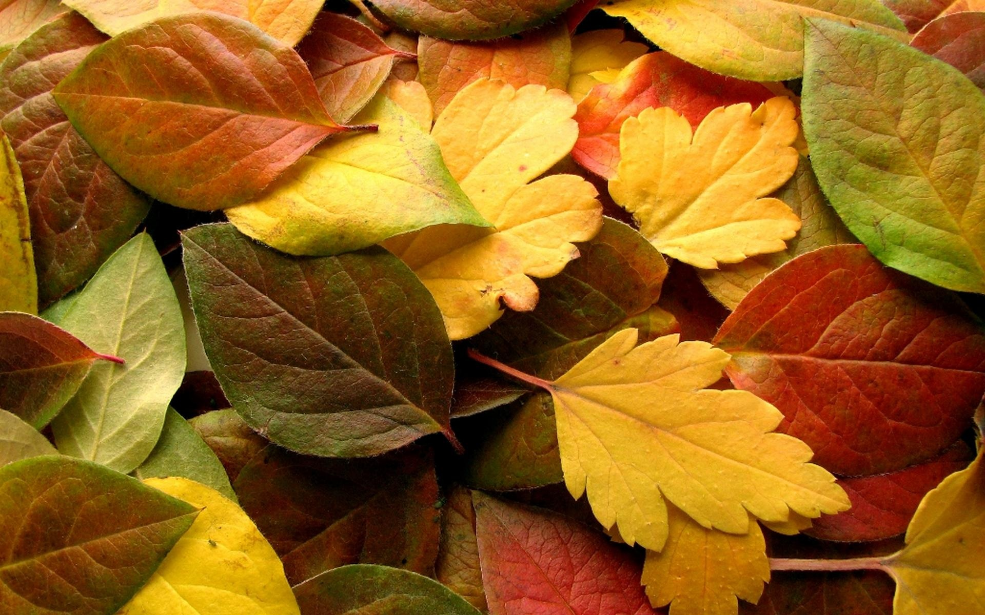 Autumn Wallpapers, 48 Best HD Images of Autumn, High Resolution