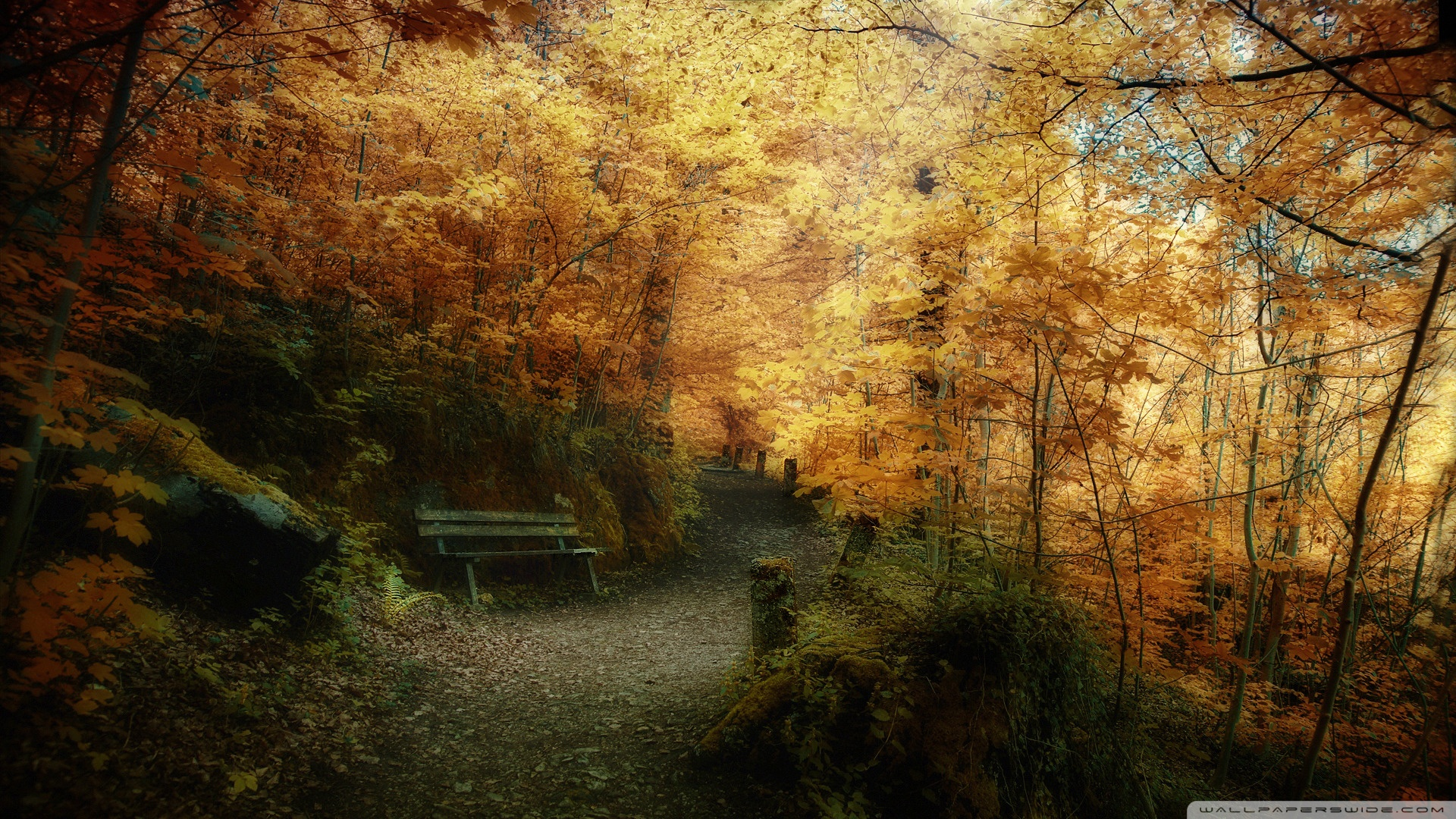 Fall HD desktop wallpaper : Widescreen : High Definition
