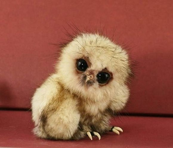 1000+ ideas about Baby Animals on Pinterest | Adorable baby