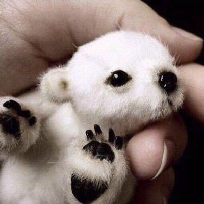 Baby Animals (@BabyAnimalPics) | Twitter