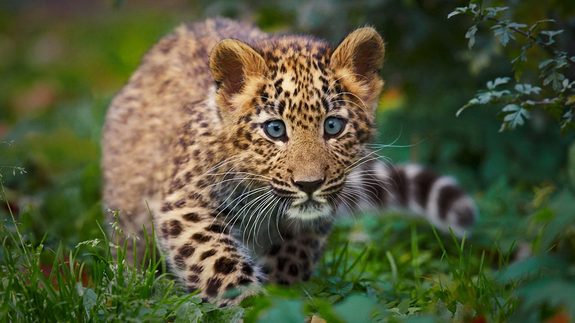 Baby Cheetah Wallpaper Iphone - Wickedsa com