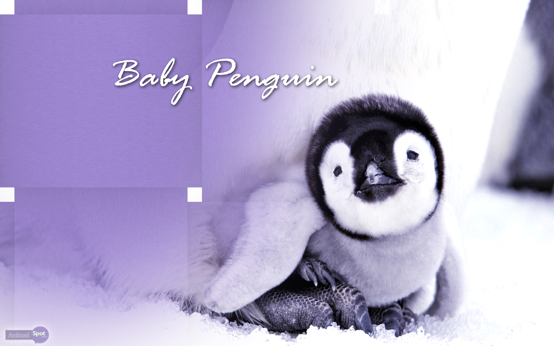 Penguin Wallpapers – Animal Spot