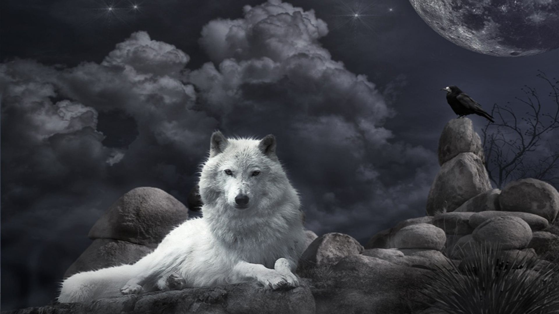 Baby Wolf Wallpapers Group (82+)