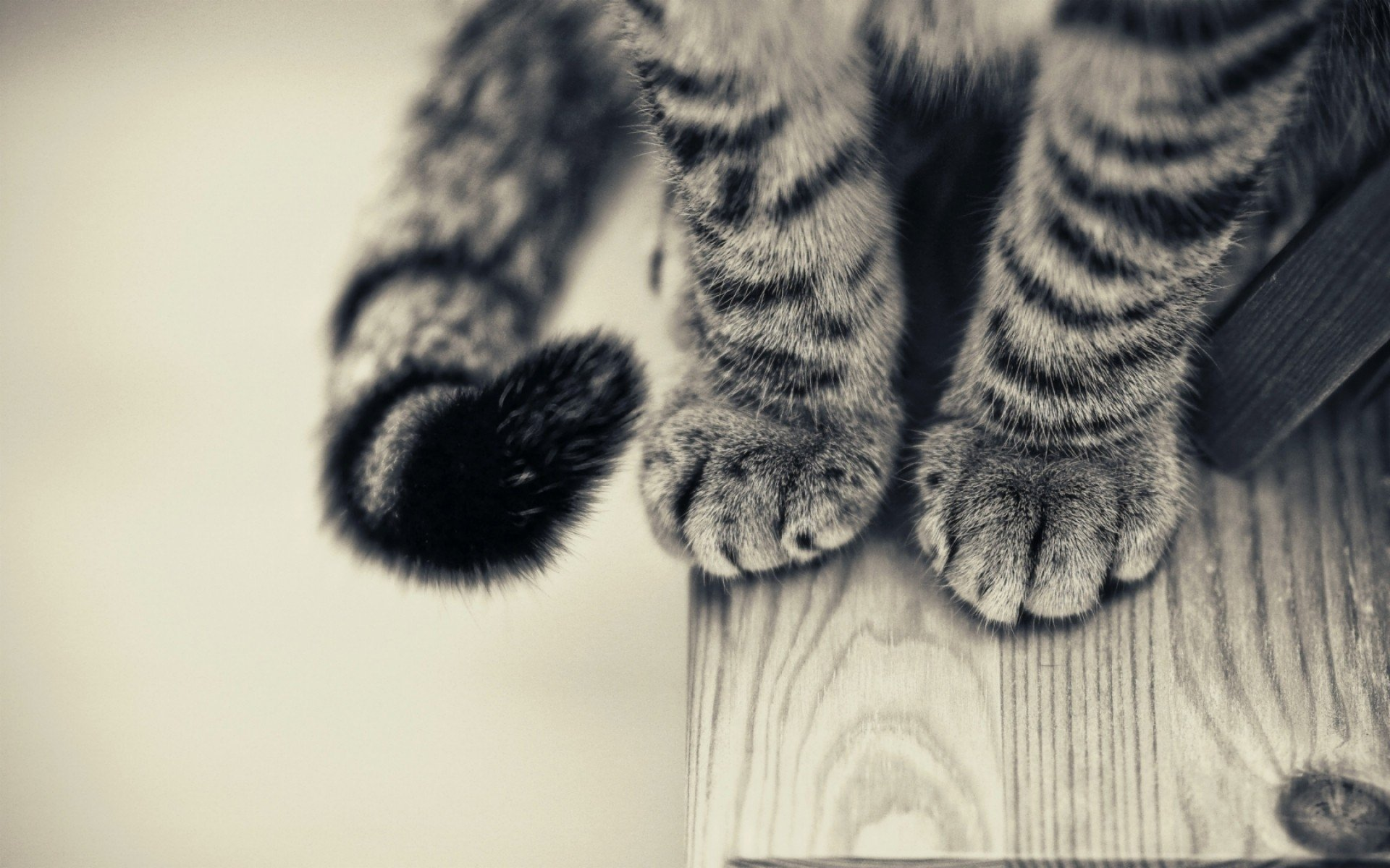 6205 Cat HD Wallpapers | Backgrounds - Wallpaper Abyss
