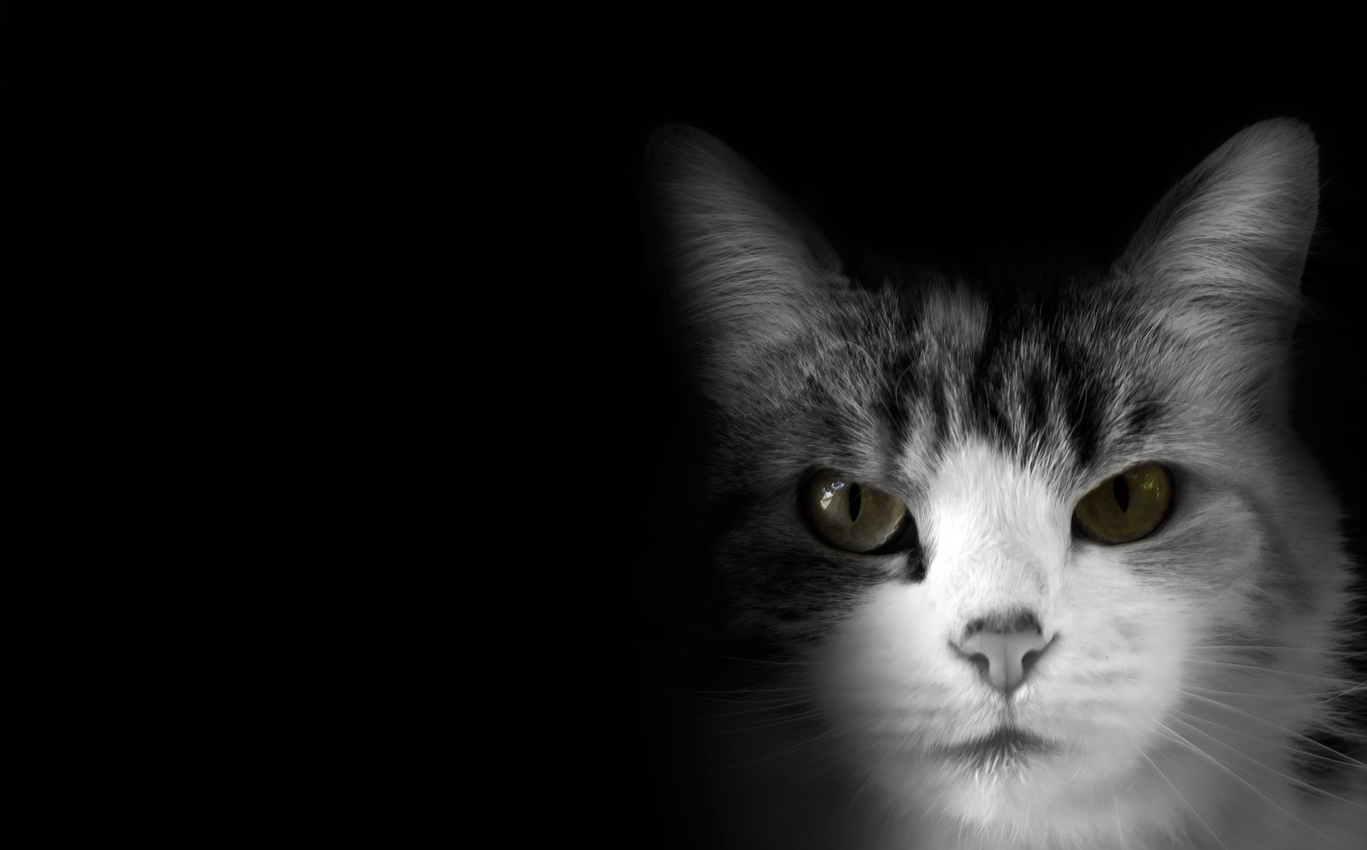 Cat On Black Background Free Stock Photo - Public Domain Pictures