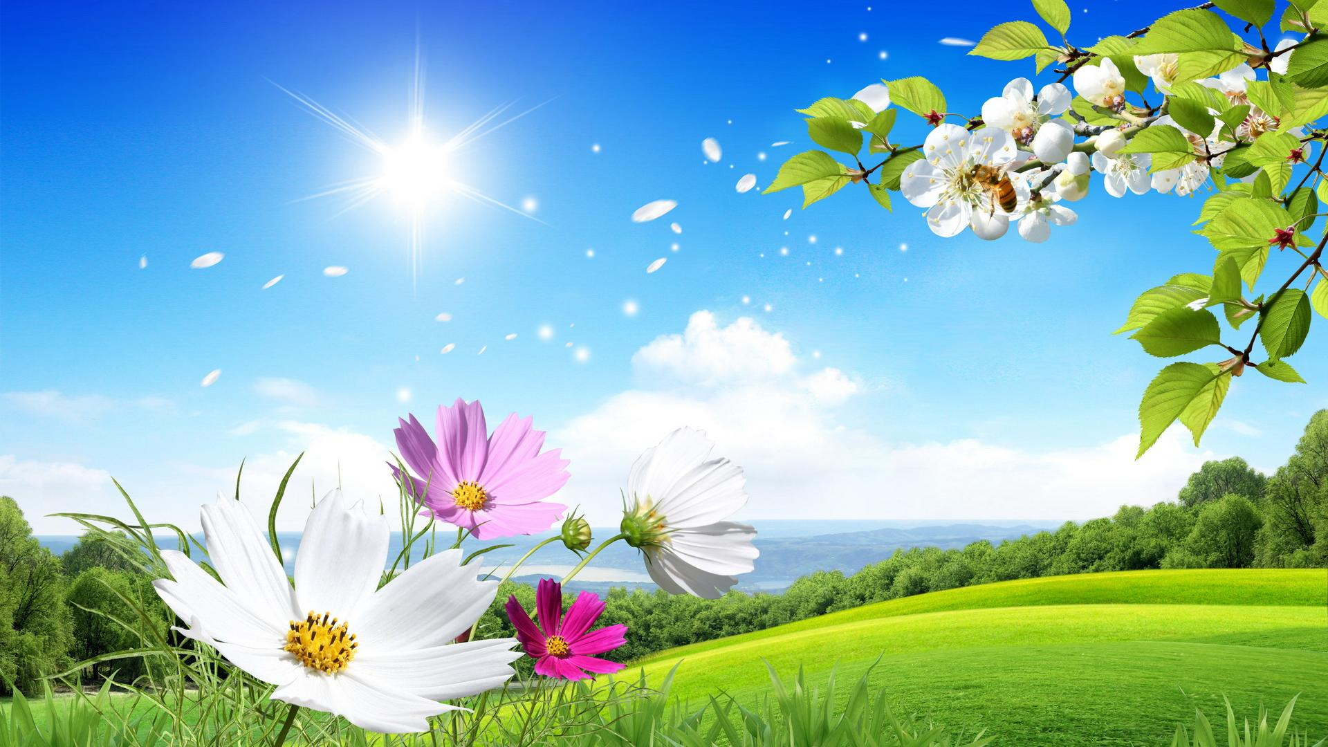 Background Flowers Desktop Wallpaper | PixelsTalk Net