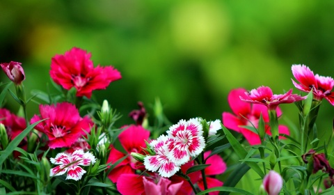 Collection of Flower Wallpaper For Desktop Background on HDWallpapers