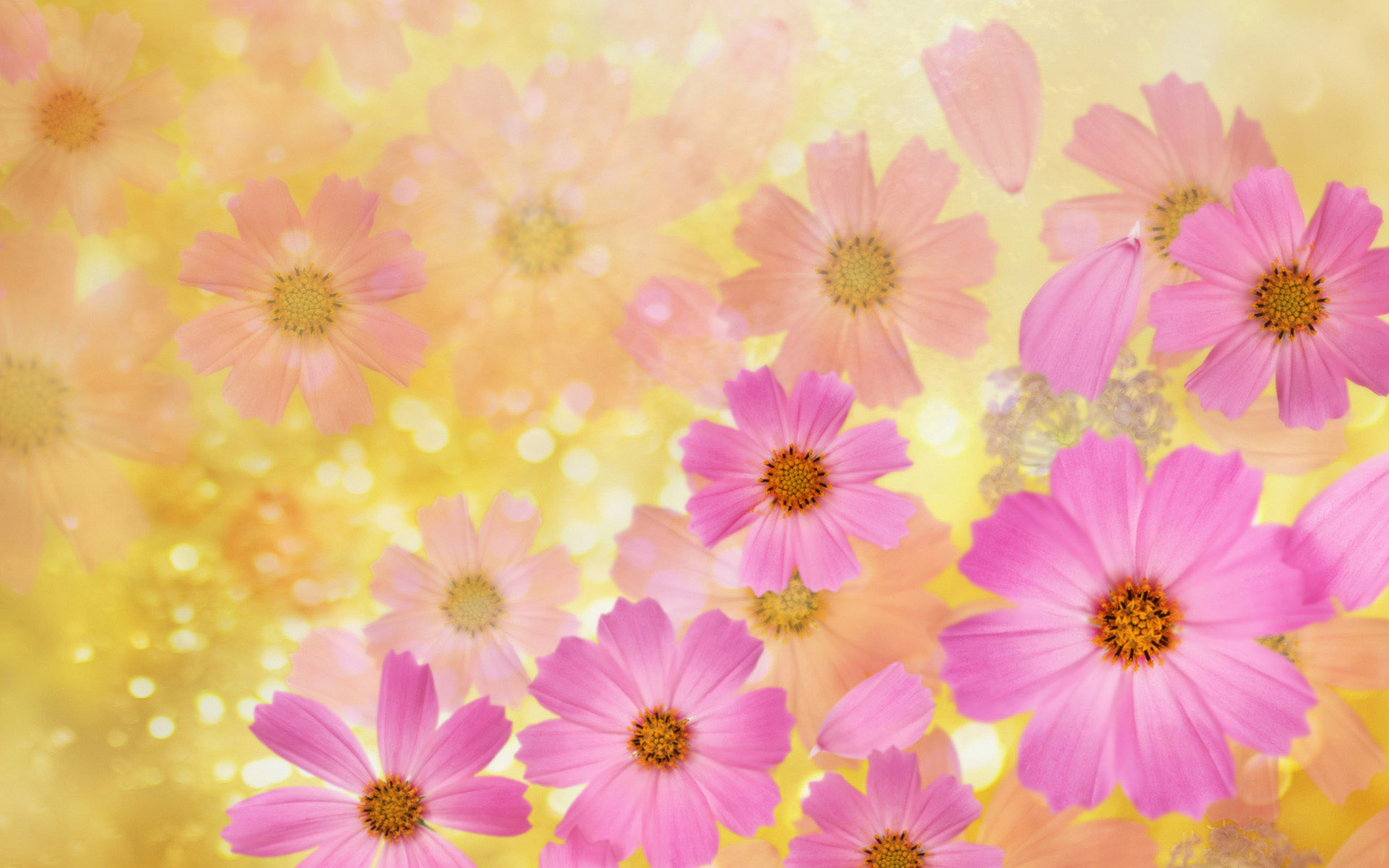 flower backgrounds | Cosmos flowers Wallpaper | High Quality