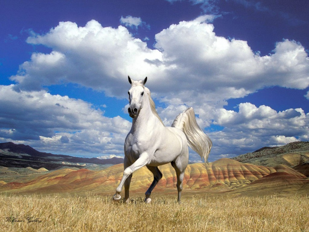 Horses Backgrounds (87+)