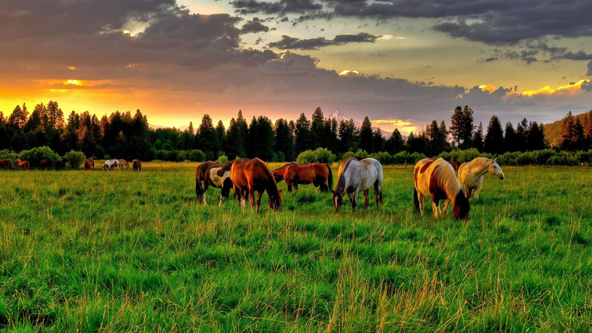 Wild Horse Wallpaper Background - WallpaperSafari