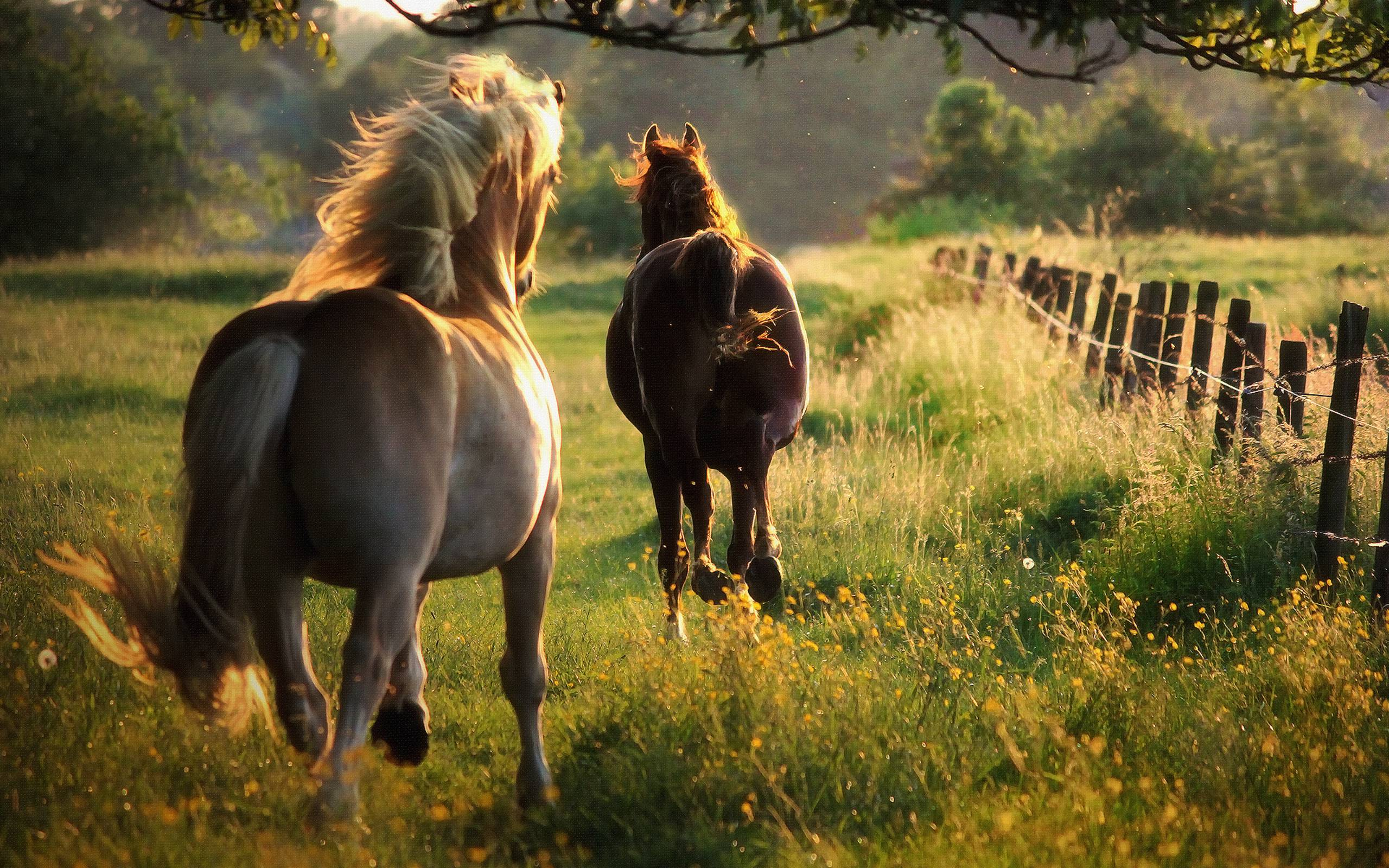 Horse Backgrounds - Wallpaper Cave