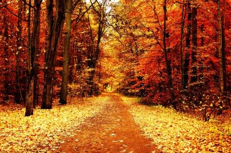 Fall Background - wallpaper