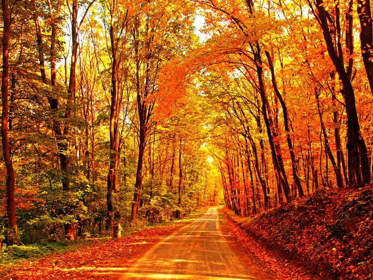 Fall background  | Halloween | Pinterest | Backgrounds, Fall and