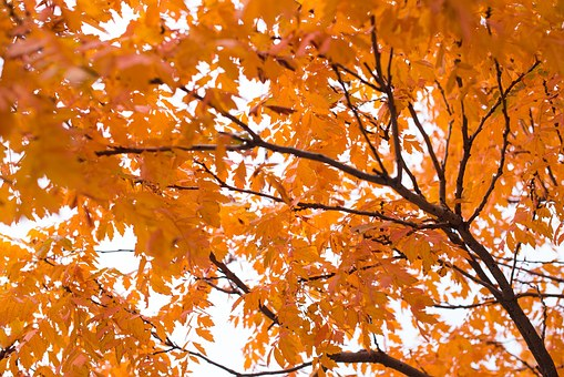 Fall, Leaves, Background - Free images on Pixabay