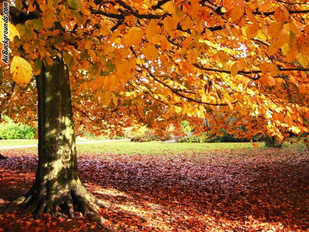 Background Images Fall Group (56+)