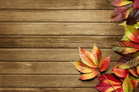 Collection of Fall Background Image on HDWallpapers