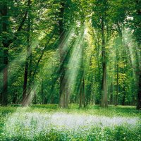 Nature Backgrounds Pictures, Images & Photos | Photobucket