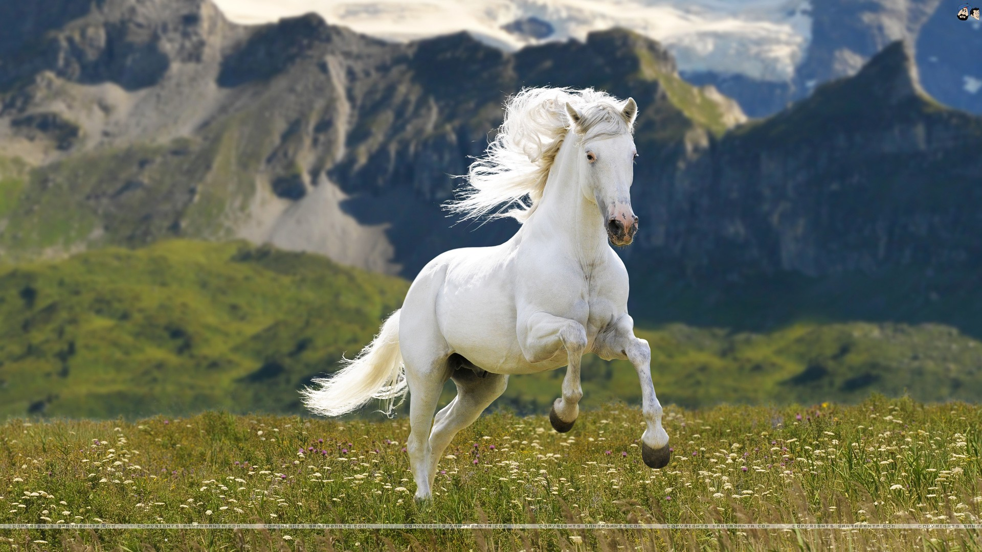 Backgrounds Horses - WallpaperPulse