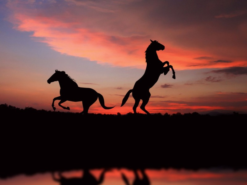 Desktop Backgrounds Horses - WallpaperSafari