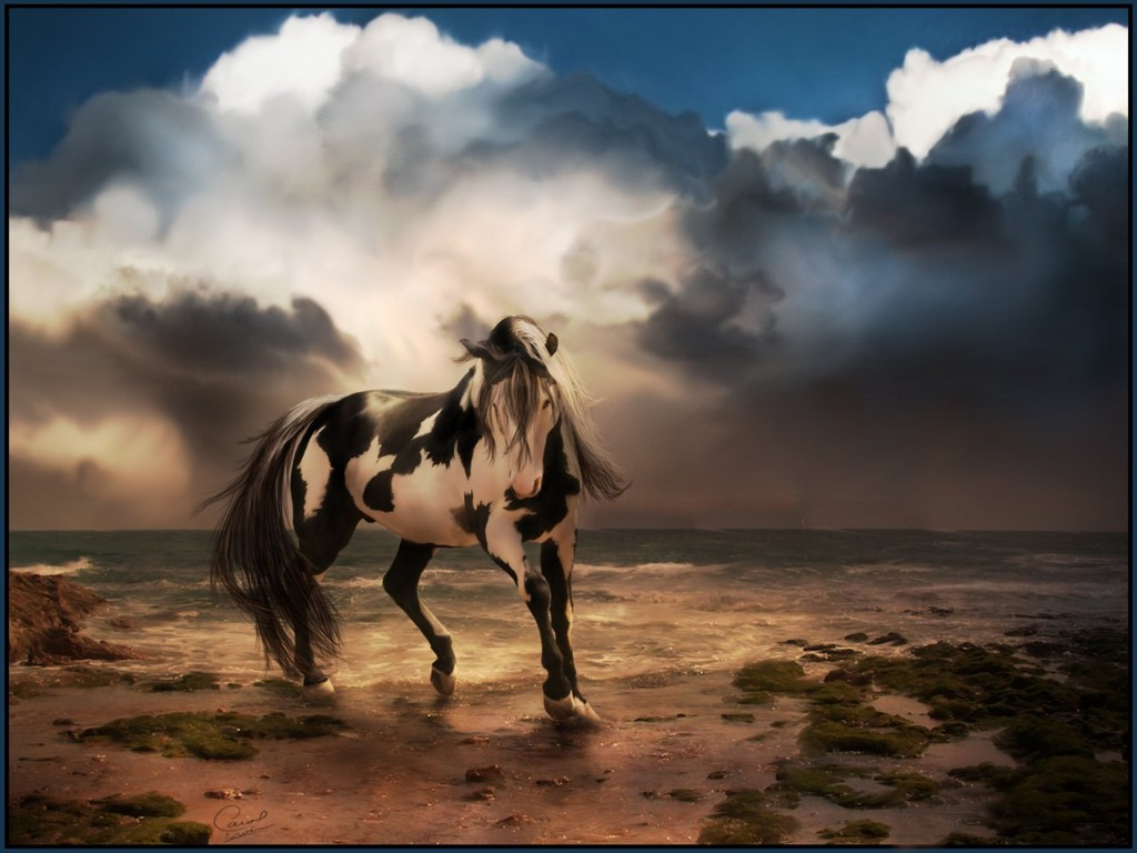 Horse Background Wallpaper - WallpaperSafari