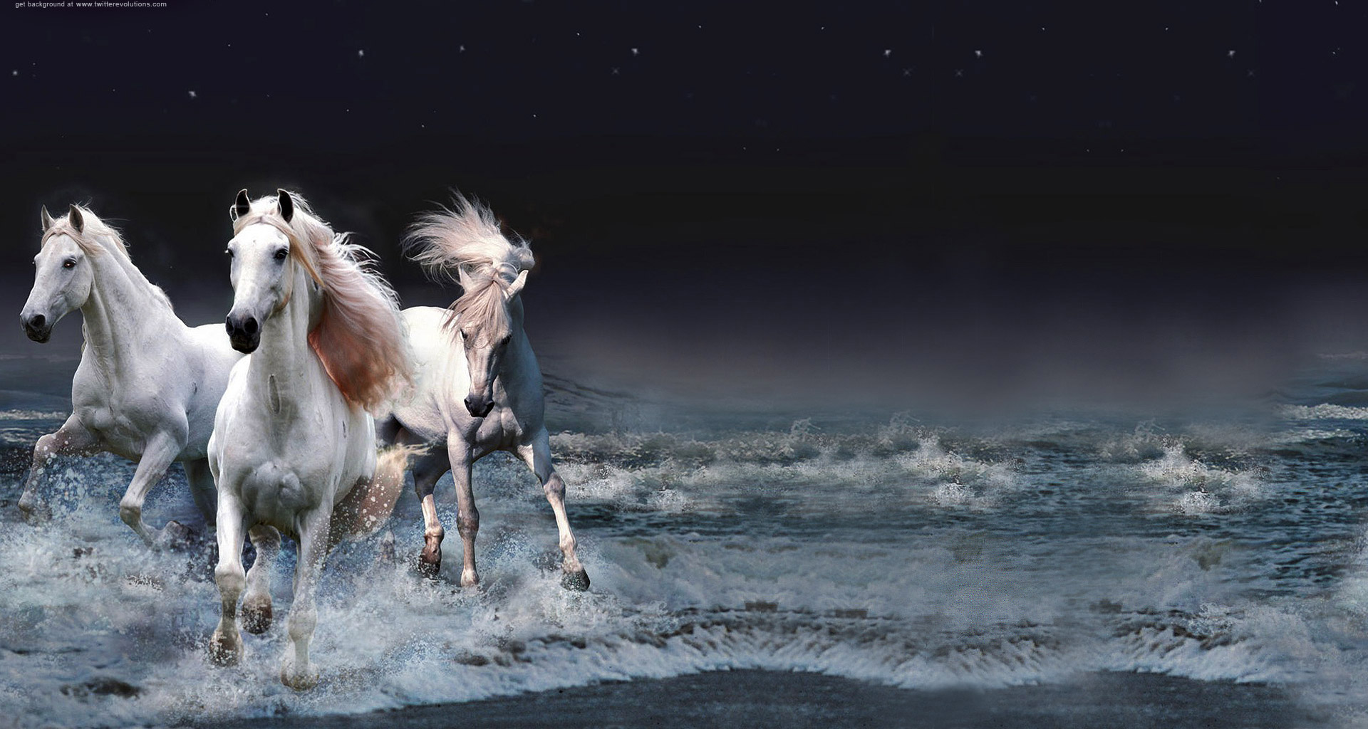 10+ images about HORSES on Pinterest | White horses, Friesian and