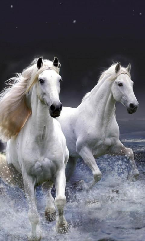Horses Background - Android Apps on Google Play