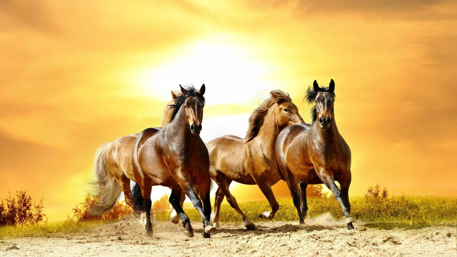 Horse Background Images Page 1