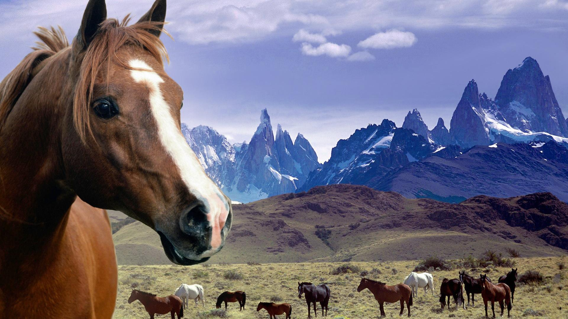 Grassland Horses Desktop Backgrounds Widescreen and HD background