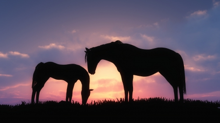 Horse - Horses & Animals Background Wallpapers on Desktop Nexus