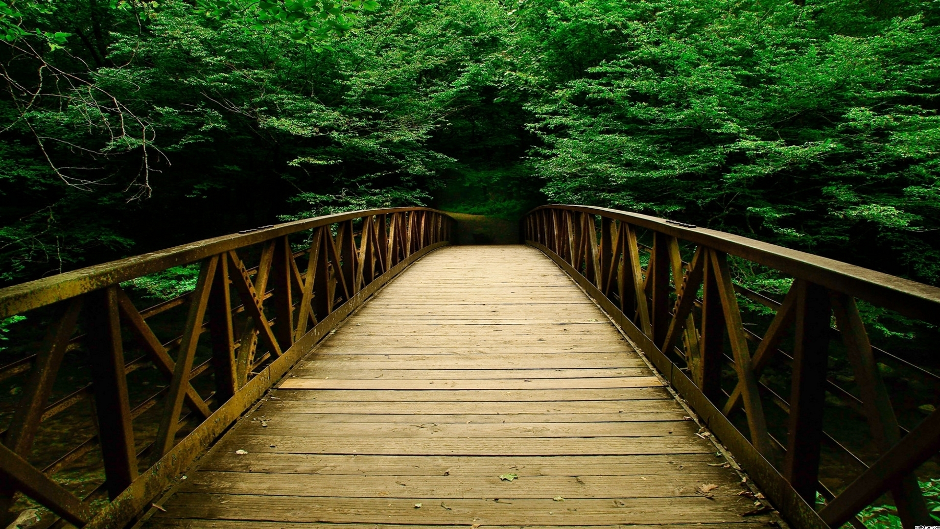 Download Bridge Bridges Nature Forest Forests Wallpaper | Full HD