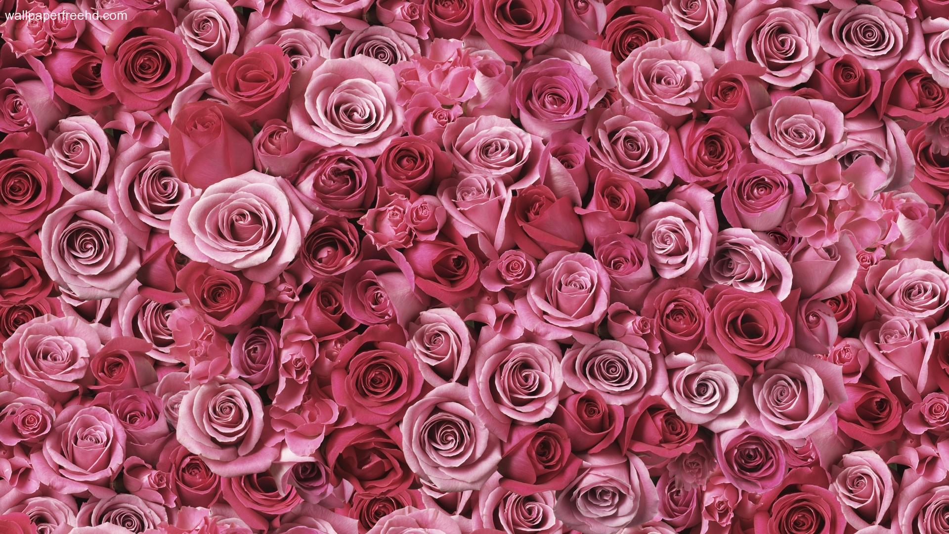 Roses Background Wallpaper Sf Wallpaper