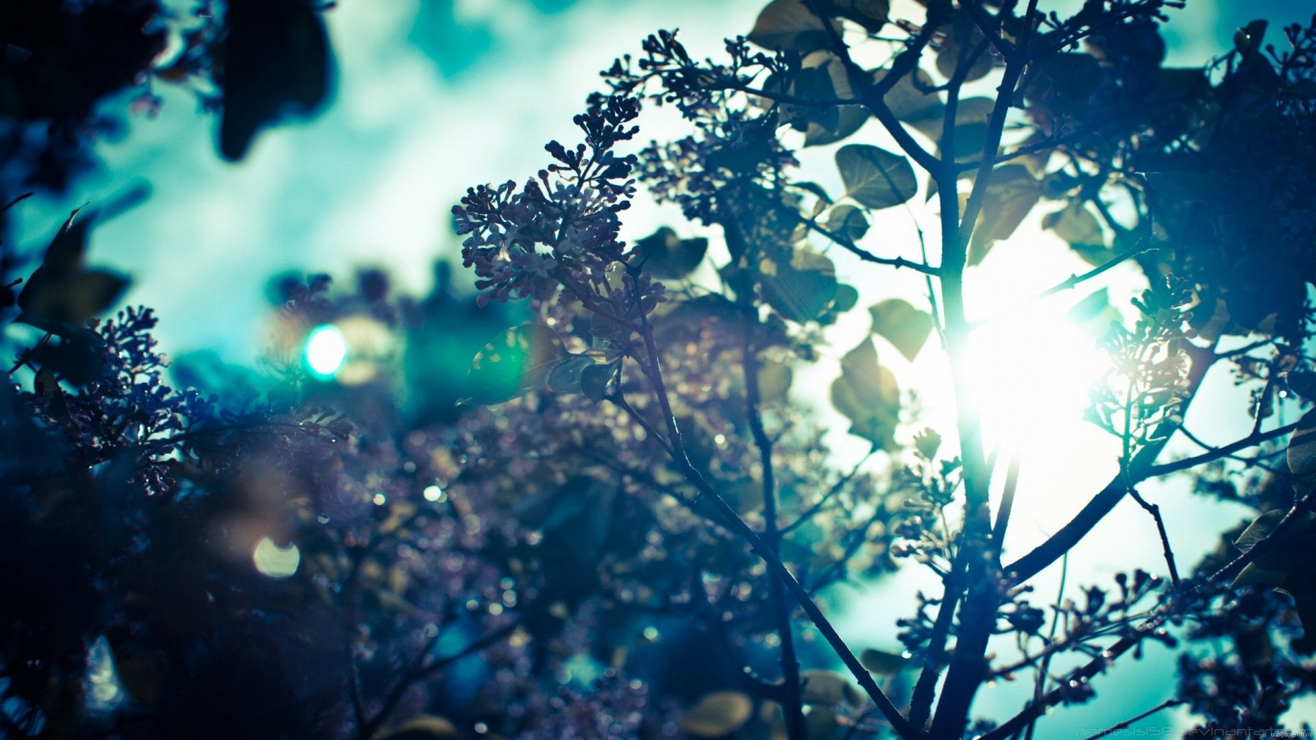 72 background wallpaper tumblr Pictures