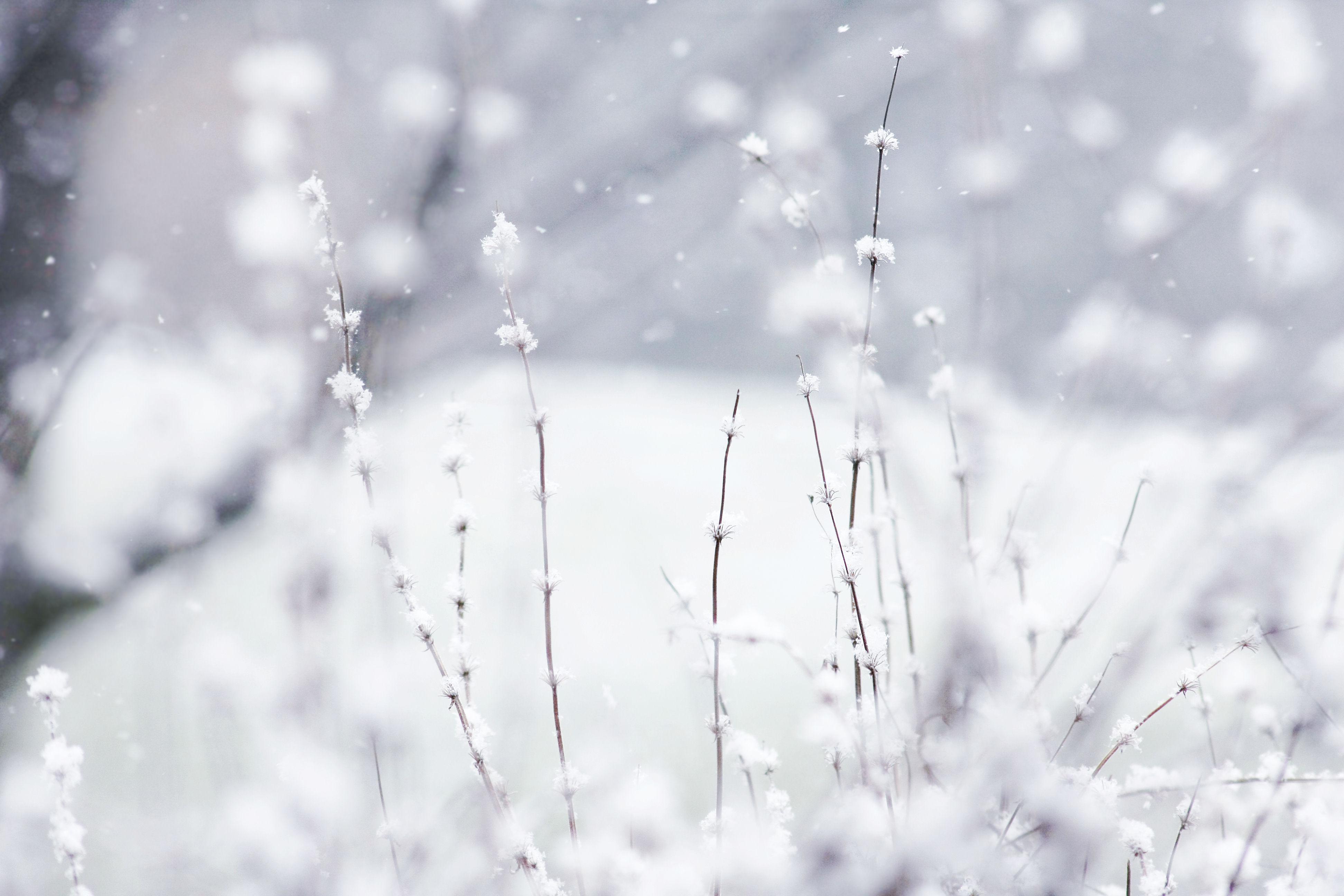 Winter Wallpaper Backgrounds - WallpaperSafari